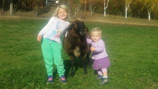 Janika und Johanna verwöhnen unsere Schafe nur all...