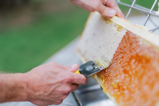 Honigwabe wird geöffnet