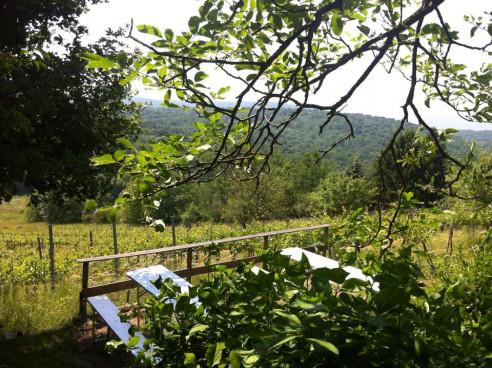 Picknickplatz im Weingarten