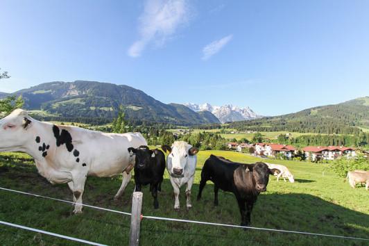 Unsere Herde auf der Weide.