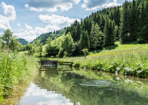 Declevas Alpenfisch Mariazell