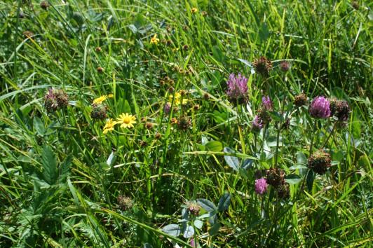 Die Artenvielfalt im Boden bekommen wir durch EM, ...