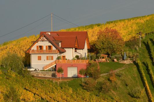 Sie wohnen mitten in den Weingärten