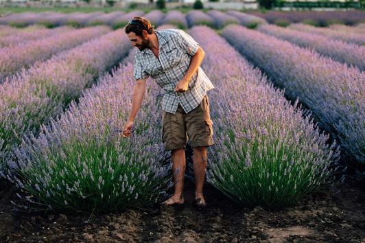 Die Provence in Österreich bei einer Duftsafari Fo...