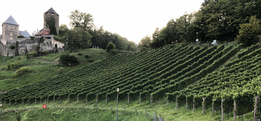 """Schilcher-Weingarten """"Ried Burgegg"""" direkt unterha..."""