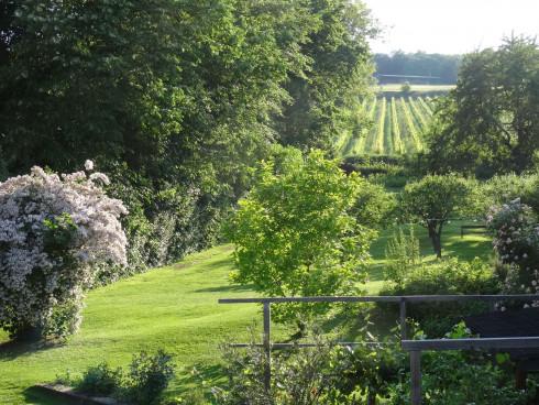 Obstgarten und Weingarten