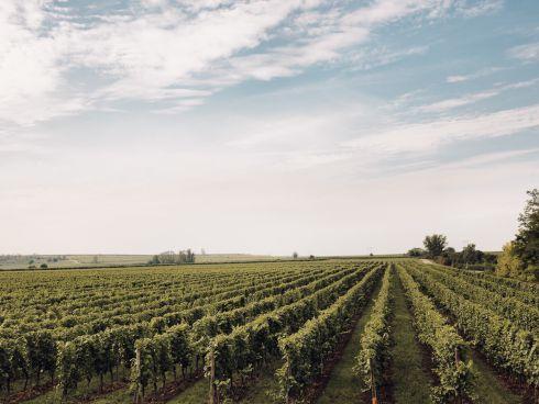 Gobelsburger Weingärten
