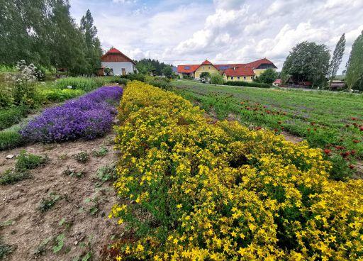 Bio-Teegarten