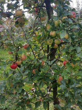 Im Obstgarten reift unser Obst