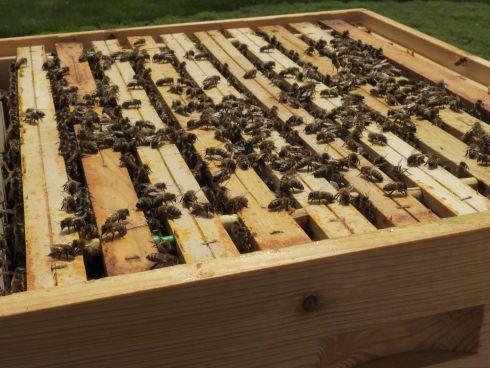 Bienen in der Beute
