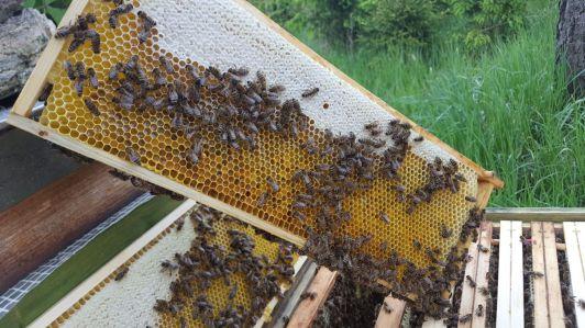 Leckerer Honig, die Völker stehen direkt im Wald