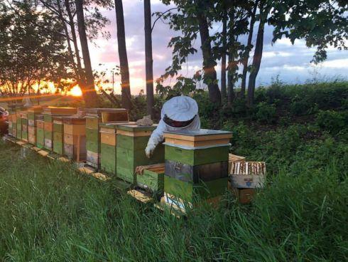 Bettina bei ihren Bienen, Abendstimmung liegt in d...