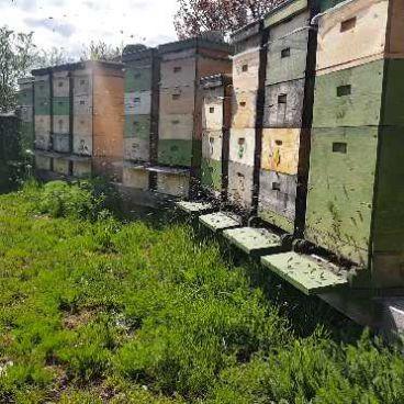 Bienen im eigenen Garten