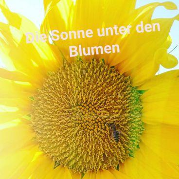 Sonnenblume mit Bienchen